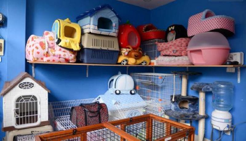Top 8 Shop phụ kiện cho thú cưng uy tín nhất Quận 2, TP. HCM