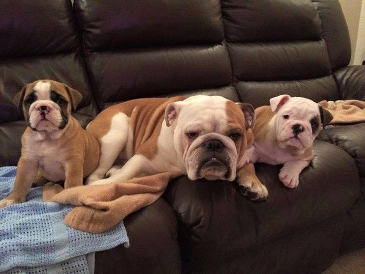 Những con cún đáng yêu