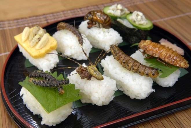 Sushi côn trùng