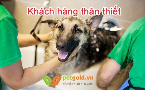 Những dịch vụ chăm sóc thú cưng tốt nhất