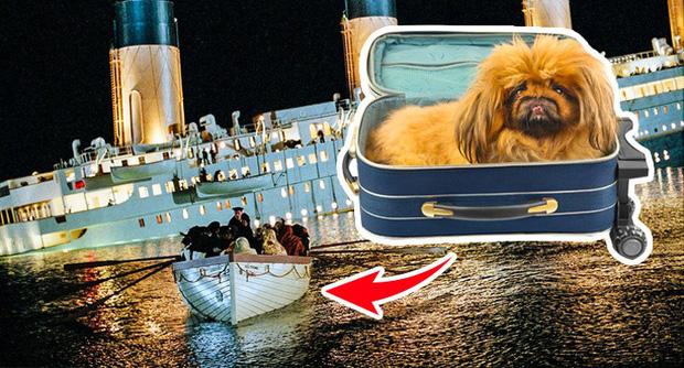 Số nạn nhân được cứu sau tai nạn Titanic: 706 người và... 3 con chó