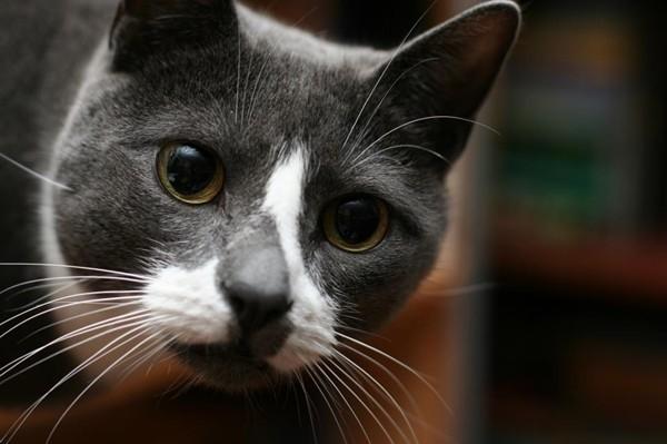 Chú mèo có hoàn cảnh đáng thương