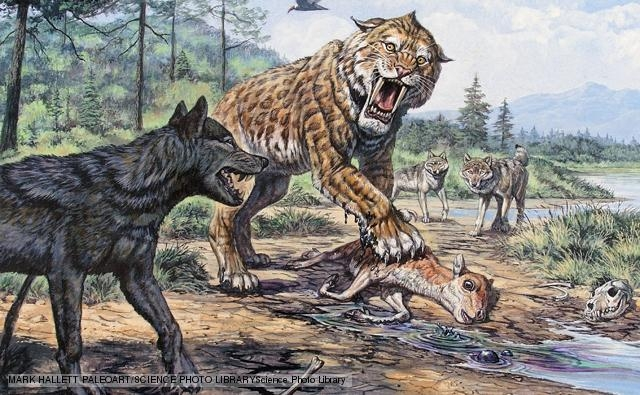Sói Khổng Lồ dài 1,5 m và nặng 100 kg.