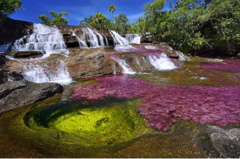 Sông Cano Cristales của Colombia