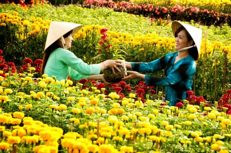 Làng hoa kiểng Sa Đéc - Đồng Tháp.