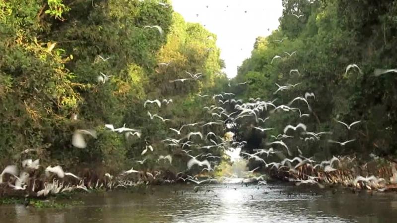Bạt ngàn Tràm chim Tam Nông - Đồng Tháp.