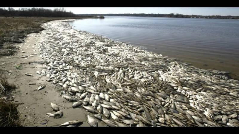 Hình ảnh cá chết trắng ven biển