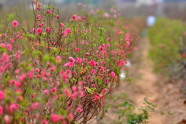 Điều chỉnh độ sáng giúp hoa nở theo ý muốn