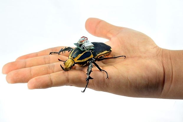 Sử dụng côn trùng có gắn thiết bị điện tử