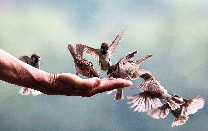 Hãy biết giữ gìn sự lương thiện trong chính trái tim và con người mình
