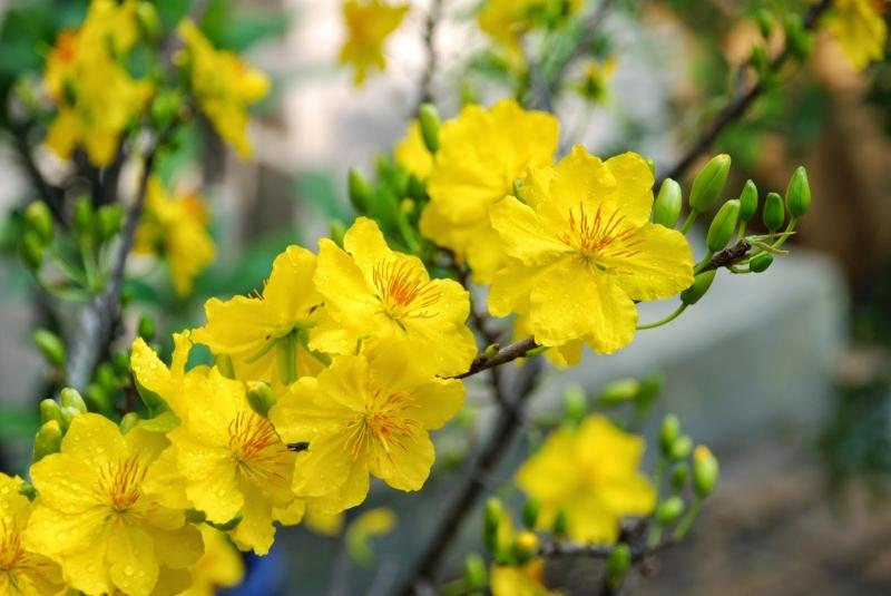 Nên sử dụng các loại hoa có màu sắc tươi, mát như xanh, đỏ, vàng vào dịp Tết