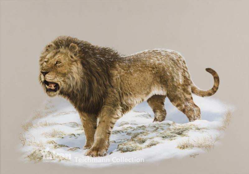 Nặng hơn 25 % con sư tử Châu Phi hiện nay.