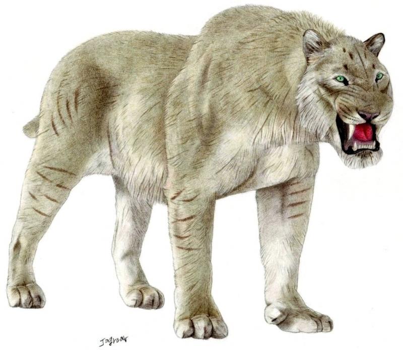 European Cave Lion