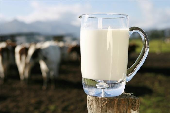 Sữa bò non Mộc Châu thưởng thức vào thời điểm buổi sáng se se lạnh là tuyệt vời nhất