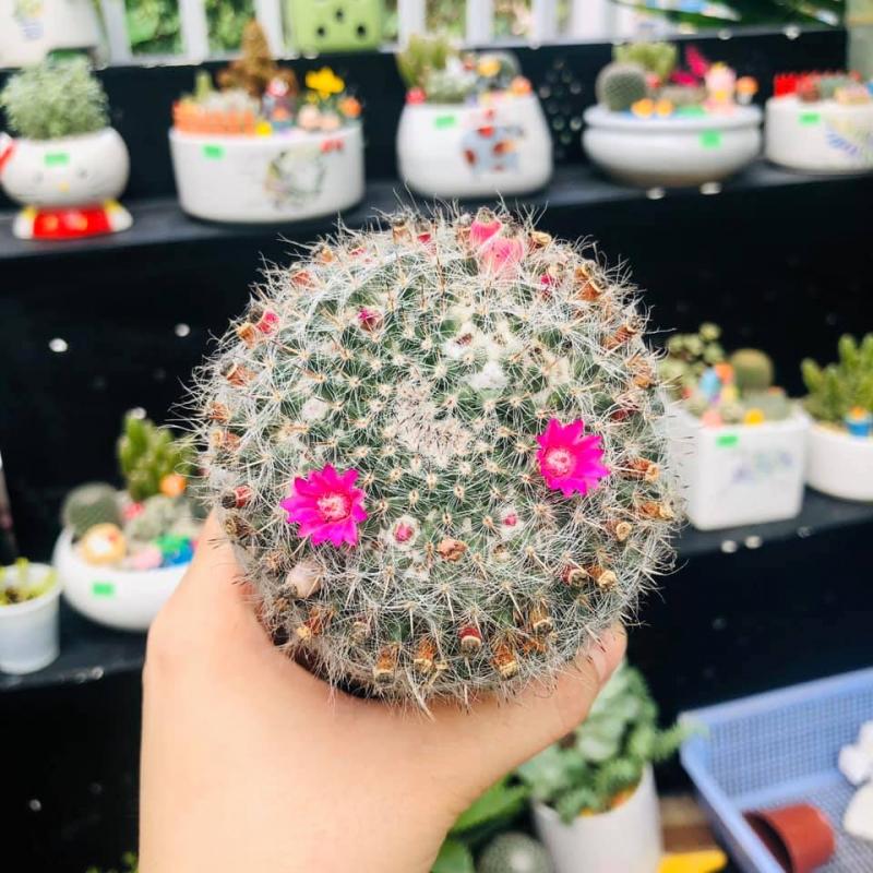 Suha Garden Nha Trang