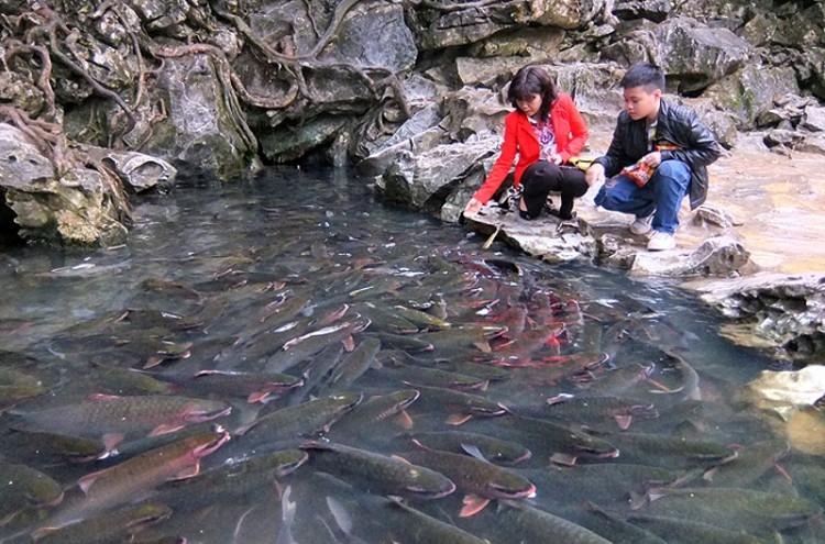 Du lịch Suối Cá thần- Cẩm Lương