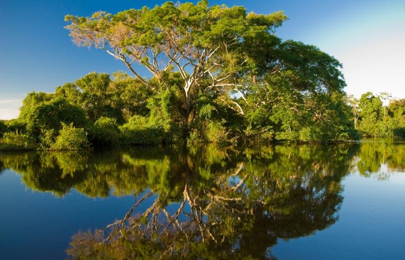 Những cây cổ thụ rợp bóng mát