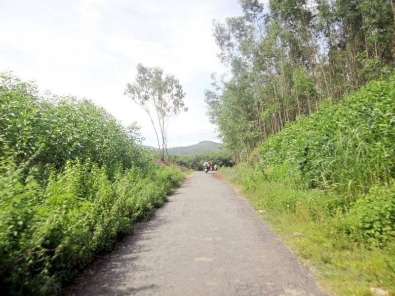 Đường lên suối phải đi ngang qua rừng keo  bạt ngàn