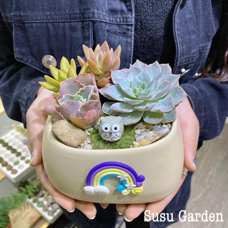 Chậu sen đá tại Susu Garden vô cùng đáng yêu