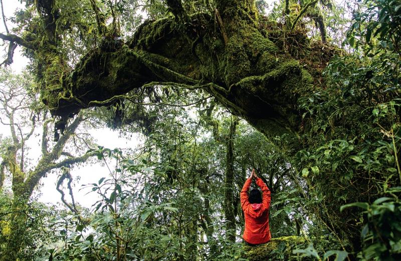 """Tả Liên Sơn biết đến với tên gọi """"khu rừng cổ tích"""