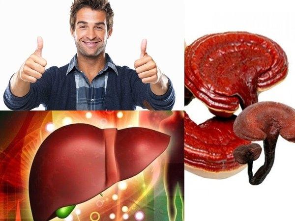 Nấm linh chi giúp ngăn ngừa cvacs mối nguy hiểm cho lá gan của bạn.