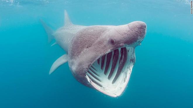 Tại sao gọi là cá nhám phơi nắng?