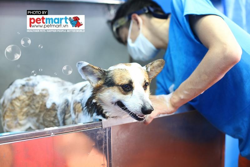 Tắm cho vật nuôi để tránh các tác nhân gây dị ứng.