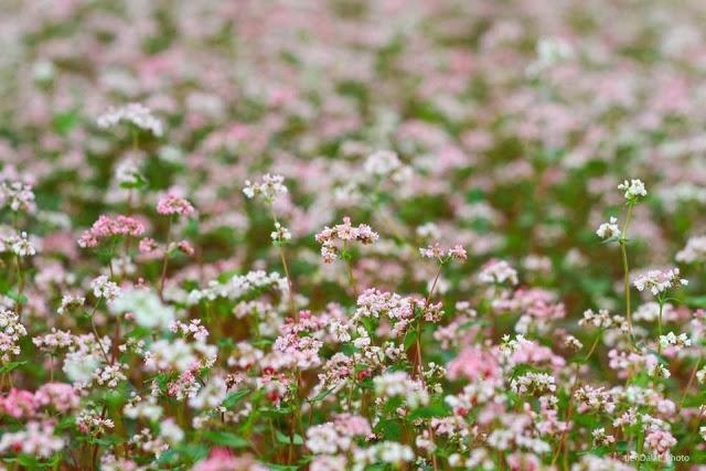 Những bông hoa li ti.