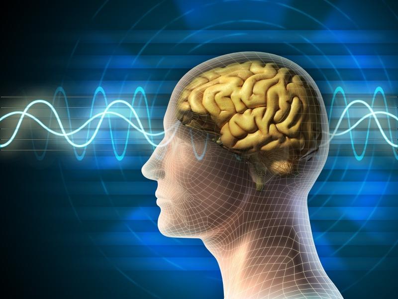 bộ não con người phân tích
