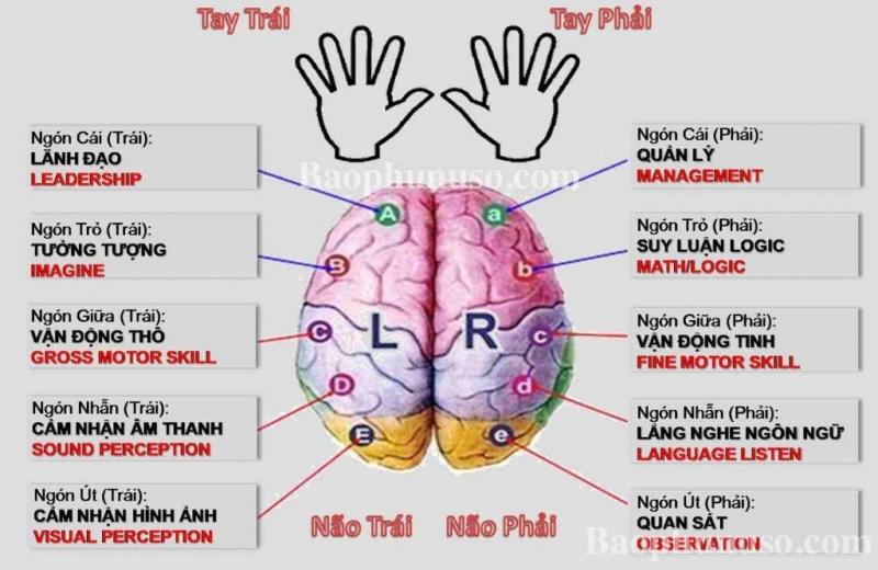 Tận dụng cả 2 bán cầu não để đạt hiệu quả tối đa.