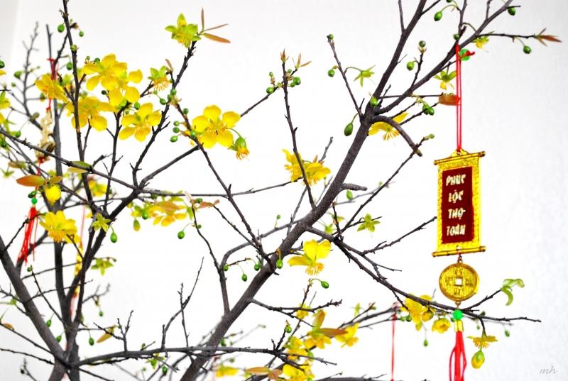 Tặng các loại hoa cho người thân vào đầu năm mới