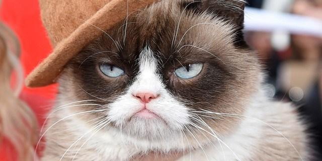 Chú mèo có khuôn mặt