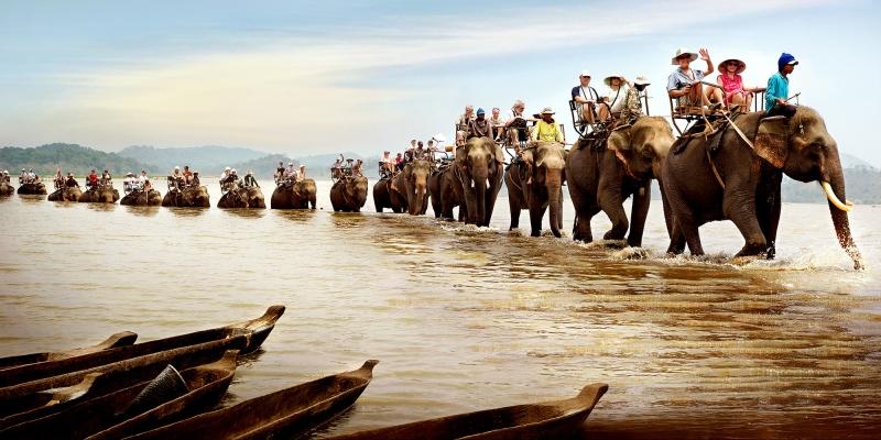 Những đàn voi du lịch tại Tây Nguyên
