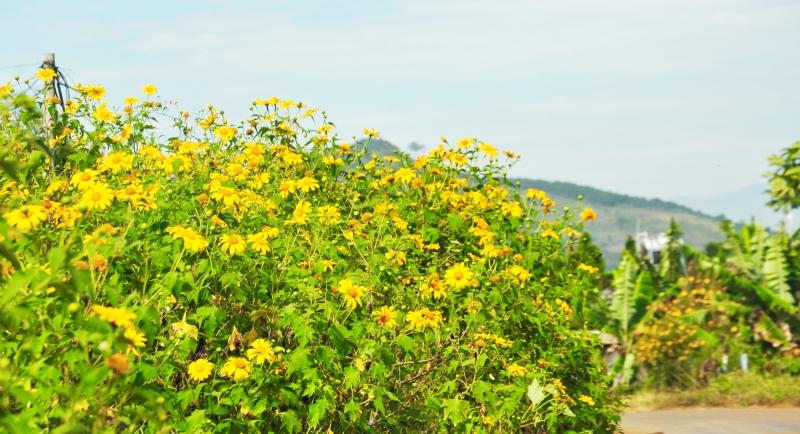 Sắc hoa vàng nồng thắm cả một vùng trời