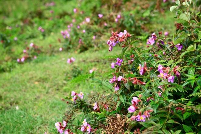Những bông hoa dại tô điểm con đường đến với thác Tình yêu