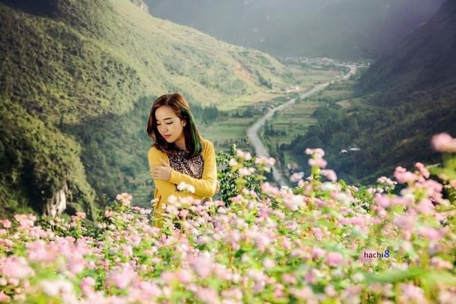 Tháng 10: Hoa Lưu Ly - Hoa Tam Giác Mạch (Hà Giang)