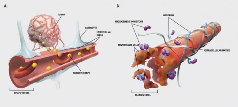 Thành công đưa thuốc vượt qua hàng rào máu não