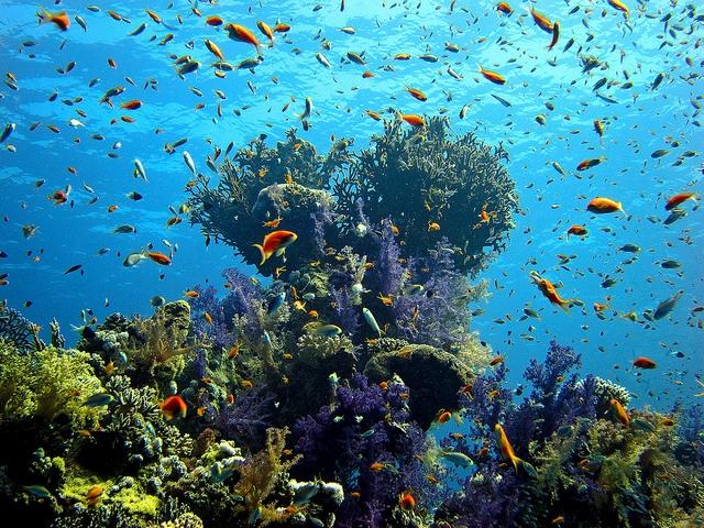 Bờ biển đỏ - Ai Cập