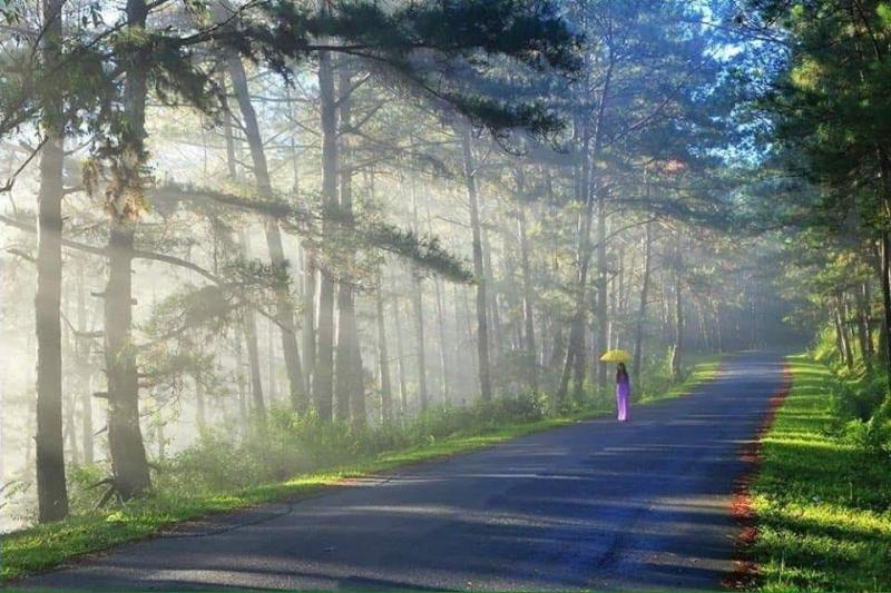 Hình ảnh Đà Lạt đẹp đến nao lòng trong sáng sớm giao mùa. Ảnh minh họa (Nguồn Internet)