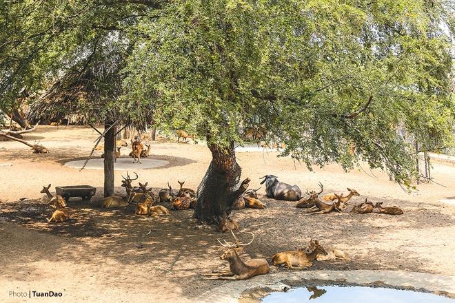Nhìn ảnh này khiến ta liên tưởng đang ở một công viên hoang dã nào đó bên tận châu Phi