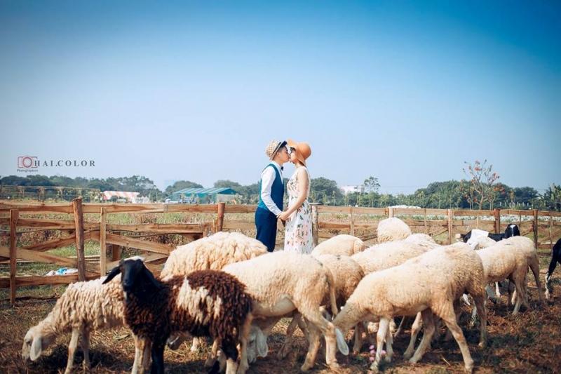 Các cặp đôi sẽ thỏa sức tạo hình với những chú cừu đáng yêu