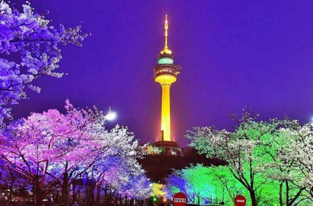 Vào mùa xuân tháo Namsan còn thơ mộng hơn dưới những tán hoa anh đào
