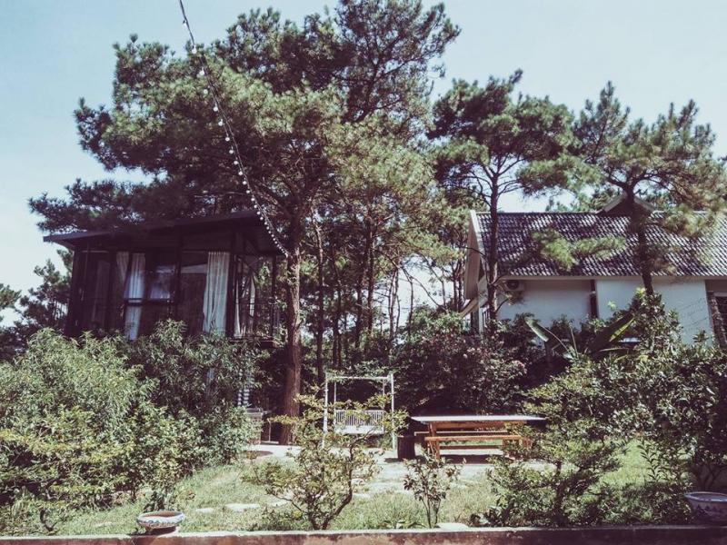 Homestay nằm trên sườn đồi thông
