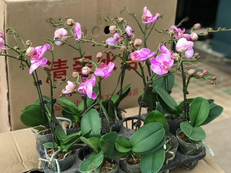 Thế giới cây và hoa Kiên Cường