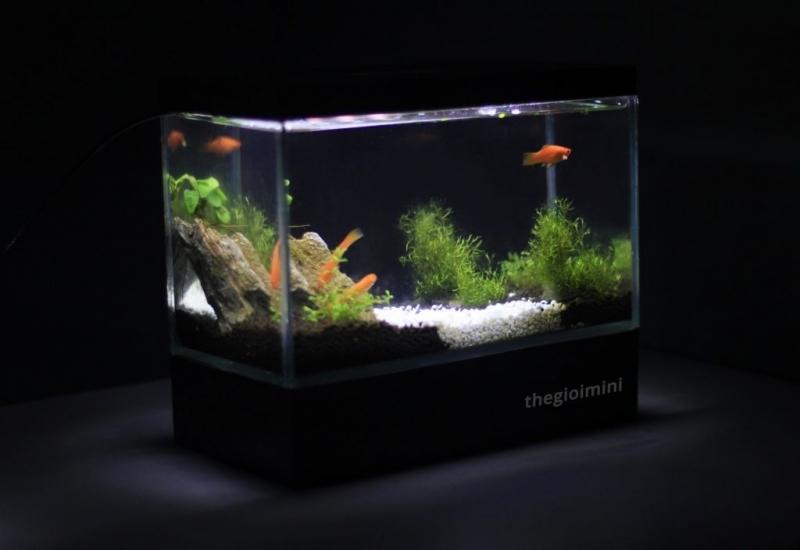 Bể cá mini