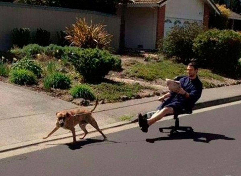 Thế này thì ai chả muốn dắt chó đi dạo