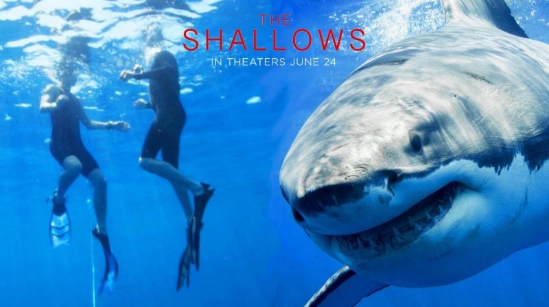 Hinh ảnh cá mập trong The Shallows