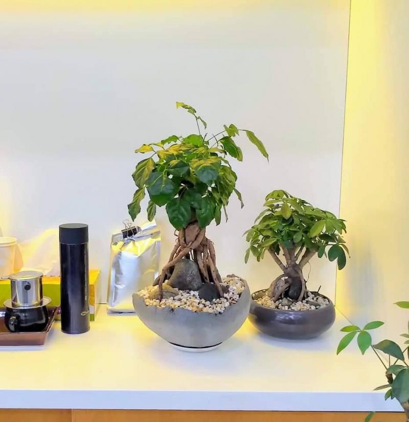 thegioicayxanh.com.vn/