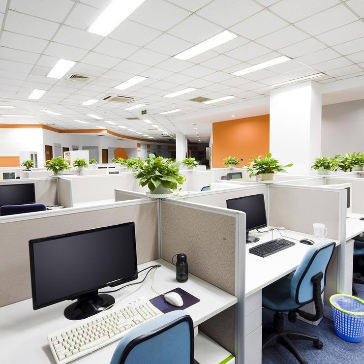 Cây xanh được để khắp các gian làm việc.