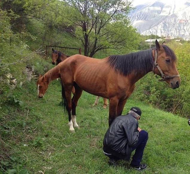Thêm một giống ngựa lai mới xuất hiện trên Trái Đất!